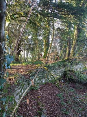 Lough Ennel