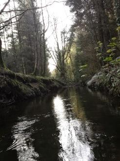 Derrycassan woods, longford
