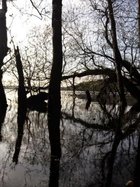 Lough Gowna Derrycassan