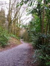 Derrycassan woods